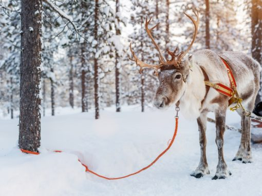 Holiday's in Lapland